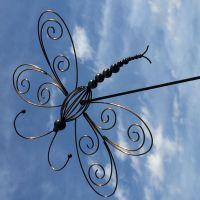 imaged dragon fly